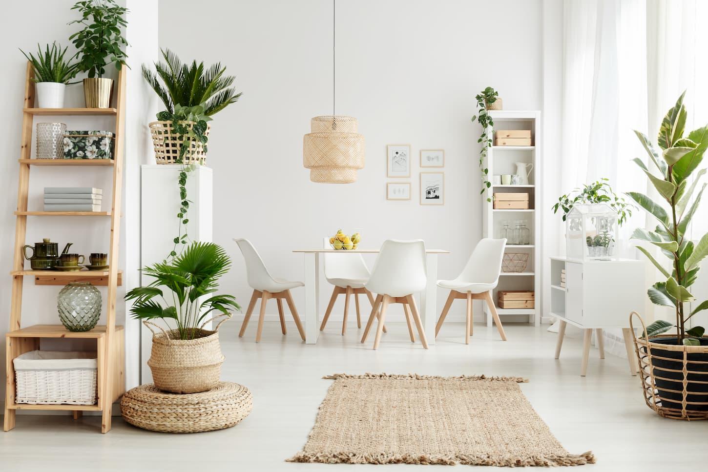 5 plantes d'intérieur increvables !